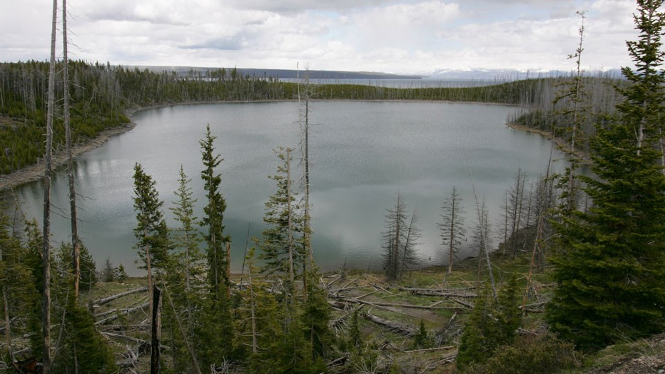 A small lake surrounded by conifer trees.