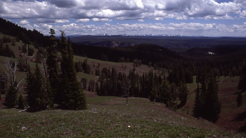 Forested mountainside with mountains and canyon in the distance.