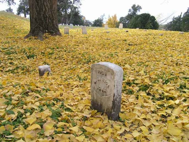 Yellow Gingko leaves lay around a soldier's headstone in the national cemetery.