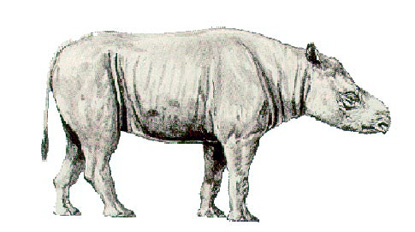 Subhyracodon Reconstruction