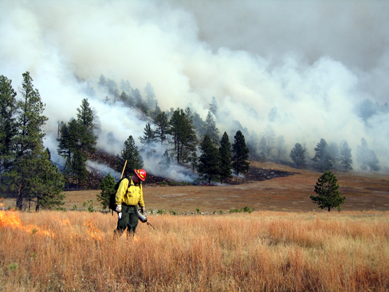 Firefighter Bill Wartenbee from Custer State Park uses a drip torch during ignition of the Tower Burn.