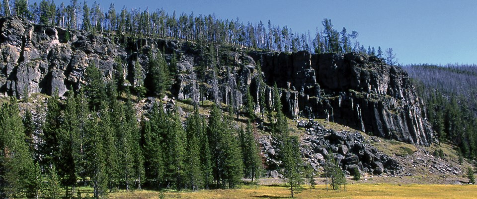 Pine trees on top of a dark cliff at the edge of a meadow