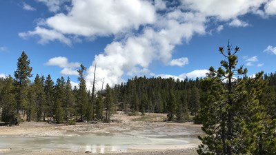 Steam rises into the blue sky from the forest where Steamboat Geyser is tucked away.