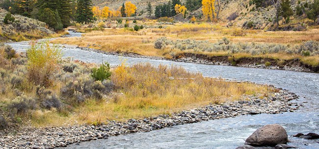 A river's banks are covered in sage brush, trees with yellow leaves, and tall conifer trees.