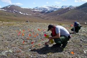 Archaeologists working in the mountains of Yukon-Charley Rivers