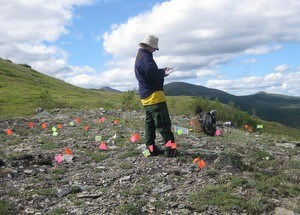 Staff archaeologist documenting a prehistoric archaeology site in the Yukon-Tanana uplands.